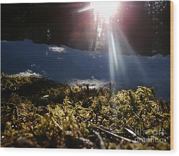 Moss In The Sunlight Wood Print by Steven Valkenberg