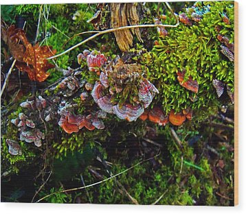Moss Mushrooms And Knocks Wood Print by Steve Battle