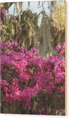 Wood Print featuring the photograph Moss Over Azaleas by Patricia Schaefer