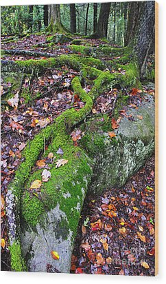 Moss Roots Rock And Fallen Leaves Wood Print by Thomas R Fletcher