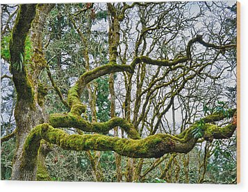 Wood Print featuring the photograph Mossy Green by Kevin Munro