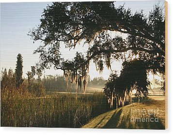 Mossy Oak Morning Wood Print