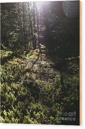 Mossy Patch Wood Print by Steven Valkenberg