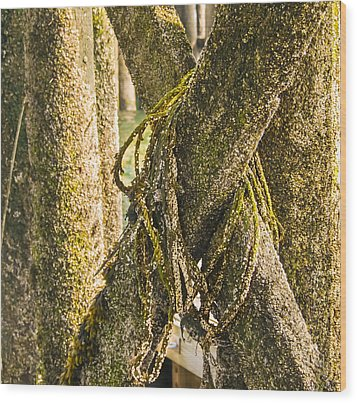 Mossy Pier Wood Print by Ernest Puglisi