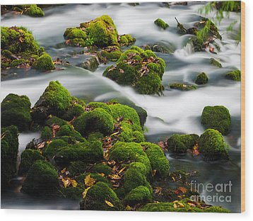 Mossy Spring Wood Print by Shannon Beck-Coatney