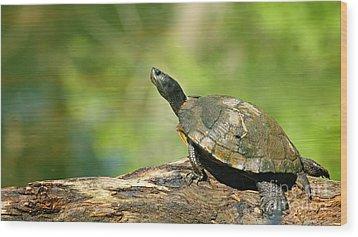 Mossy Turtle Wood Print