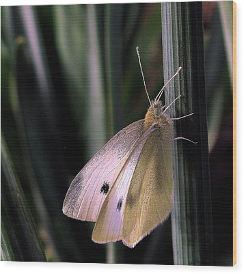 Wood Print featuring the photograph Moth In Light by Suzy Piatt