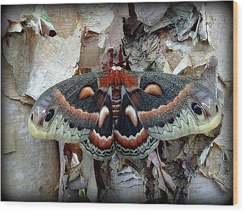 Moth On Paper Birch Wood Print