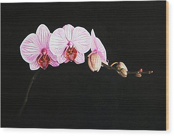 Moth Orchid Wood Print by Marna Edwards Flavell