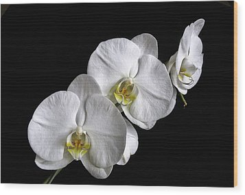 Moth Orchid Trio Wood Print