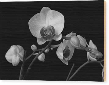 Moth Orchids Wood Print by Ron White