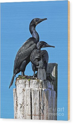 Wood Print featuring the photograph Mother And Baby Brandt's Cormorants by Susan Wiedmann