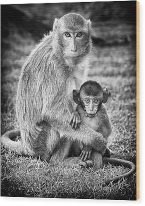 Mother And Baby Monkey Black And White Wood Print by Adam Romanowicz