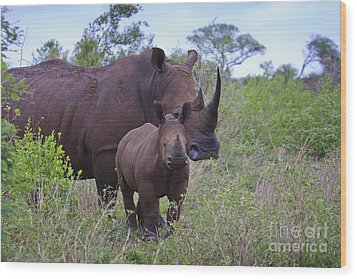 Mother And Baby Rhino Wood Print