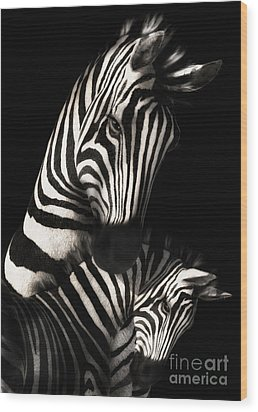 Mother And Baby Zebra Wood Print