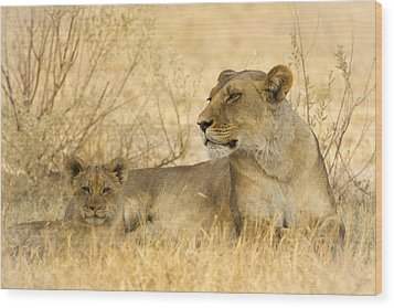 Mother And Cub Wood Print by Alison Buttigieg