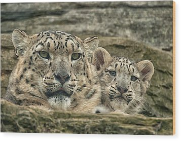 Wood Print featuring the photograph Mother And Cub by Chris Boulton