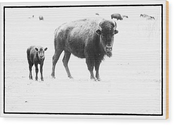 Mother Bison And Her Calf Wood Print by Melany Sarafis