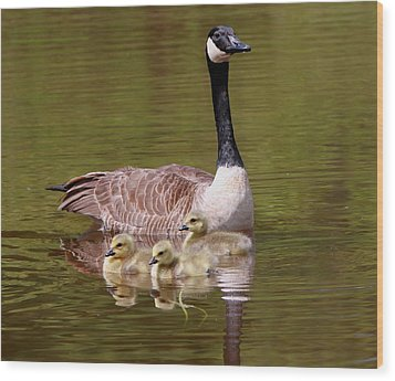 Mother Goose With Baby Geese Wood Print by Edward Kocienski