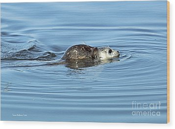 Wood Print featuring the photograph Mother Harbor Seal And Pup by Susan Wiedmann