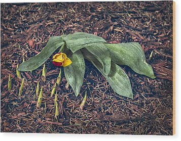 Mother Nurture Wood Print by Nancy Strahinic