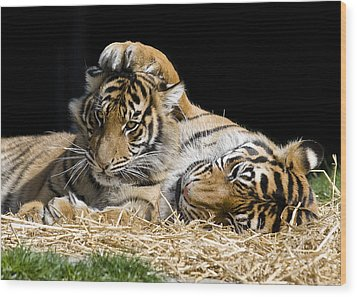 Mothers Loving Touch Wood Print by Gary Neiss