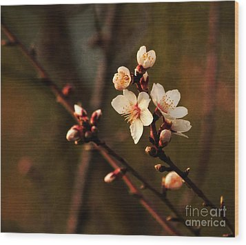 Wood Print featuring the photograph Mother's Spring Blossoms by Marjorie Imbeau