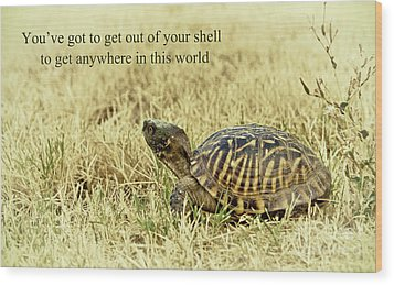 Motivating A Turtle Wood Print by Robert Frederick