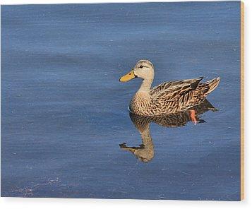 Mottled Duck Reflected Wood Print by Rosalie Scanlon