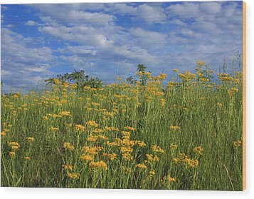 Wood Print featuring the photograph Mount Cheaha Goldenrod-alabama by Mountains to the Sea Photo