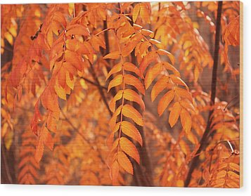 Mountain Ash Leaves - Autumn Wood Print by Jim Sauchyn