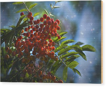 Wood Print featuring the photograph Mountain Ash by Yulia Kazansky