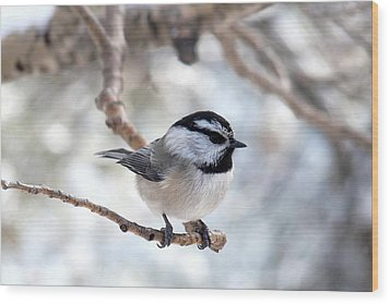 Mountain Chickadee On Branch Wood Print
