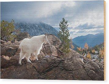 Wood Print featuring the photograph Mountain Goat by Brian Bonham