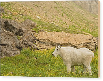 Mountain Goat In The Mountains Wood Print by Natural Focal Point Photography