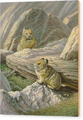 Mountain Haymakers - Pika Wood Print by Paul Krapf