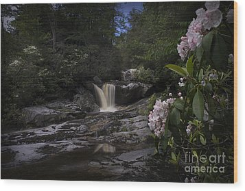 Mountain Laurel And Falls On Small Stream Wood Print by Dan Friend