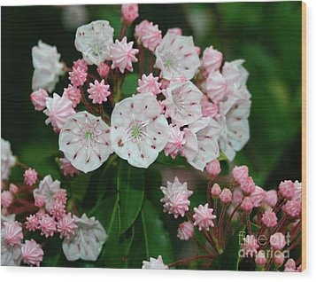 Mountain Laurel Wood Print by Annlynn Ward