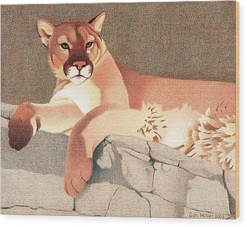 Mountain Lion Wood Print by Dan Miller