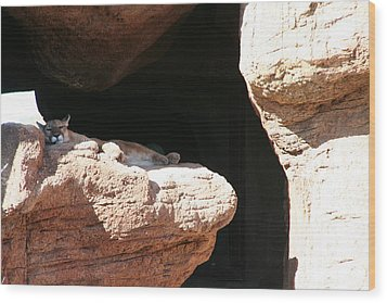 Wood Print featuring the photograph Mountain Lion by David S Reynolds
