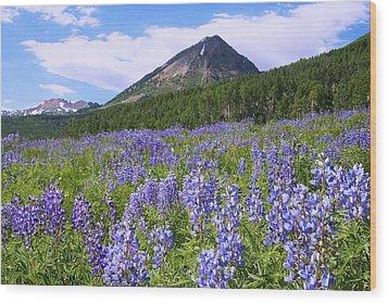 Mountain Lupine Meadow Wood Print