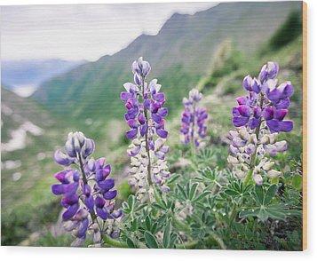 Mountain Lupine Wood Print