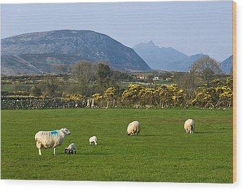 Mourne Mountains Near Kilkeel Wood Print