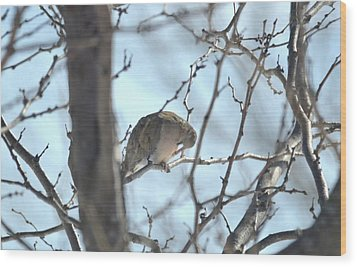 Wood Print featuring the photograph Mourning Dove by Dacia Doroff