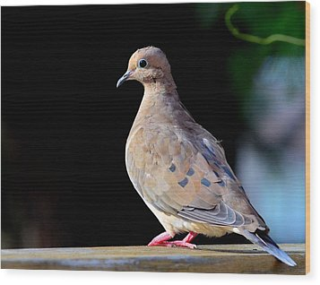 Mourning Dove Wood Print by Kathy Eickenberg