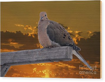Wood Print featuring the photograph Mourning Dove Orange Sky by Marjorie Imbeau