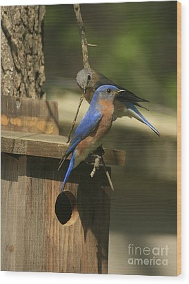 Mr. And Mrs. Bluebird Wood Print