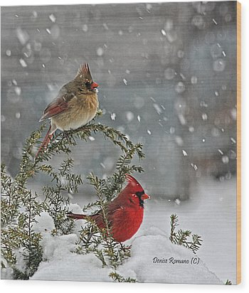 Mr. And Mrs. Cardinal Wood Print