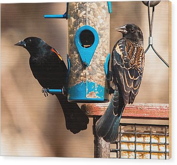 Mr. And Mrs. Red Winged Blackbird Wood Print