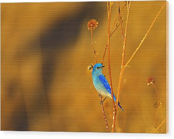 Wood Print featuring the photograph Mr. Blue by Kadek Susanto